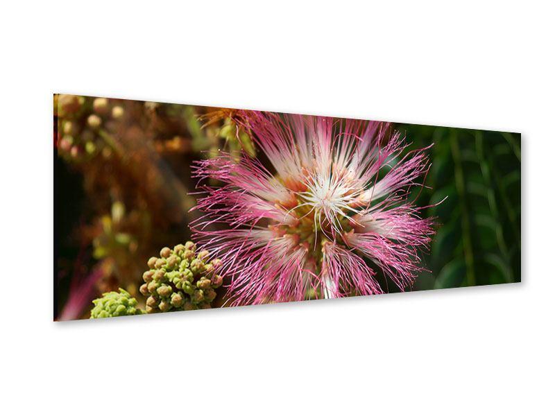 Acrylglasbild Panorama Die Regenbaumblüte
