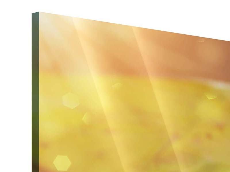 Acrylglasbild Panorama Seerose