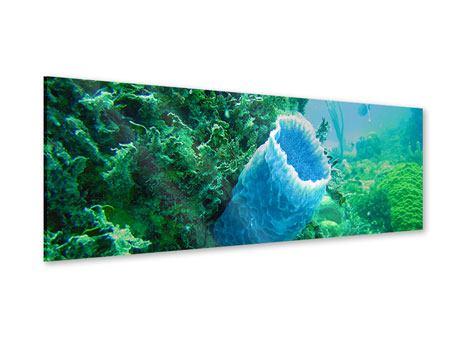 Acrylglasbild Panorama Korallen