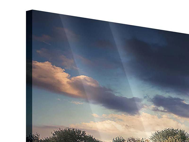 Acrylglasbild Panorama Die Wiesenmargerite am Fluss