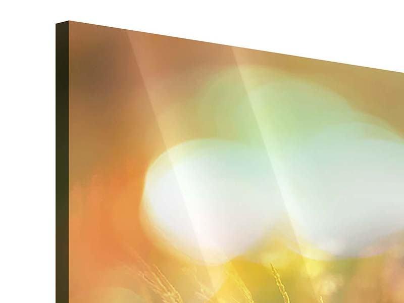 Acrylglasbild Panorama Blumenwiese in der Abenddämmerung