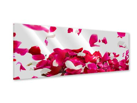 Acrylglasbild Panorama Für mich soll`s rote Rosen regnen