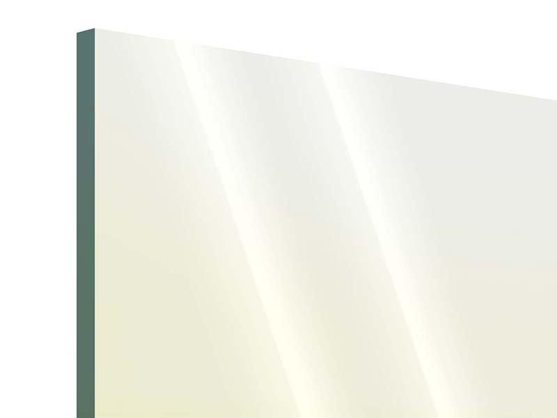 Acrylglasbild Panorama Haifischflosse