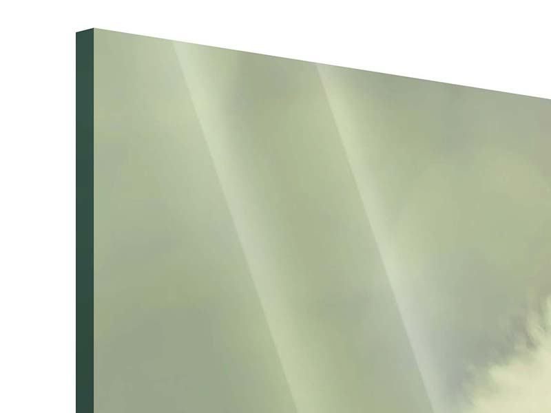 Acrylglasbild Panorama Die Pusteblume