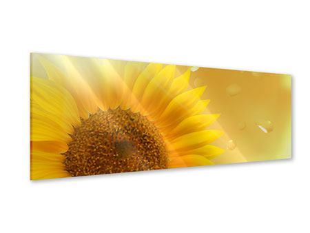 Acrylglasbild Panorama Sonnenblume im Morgentau