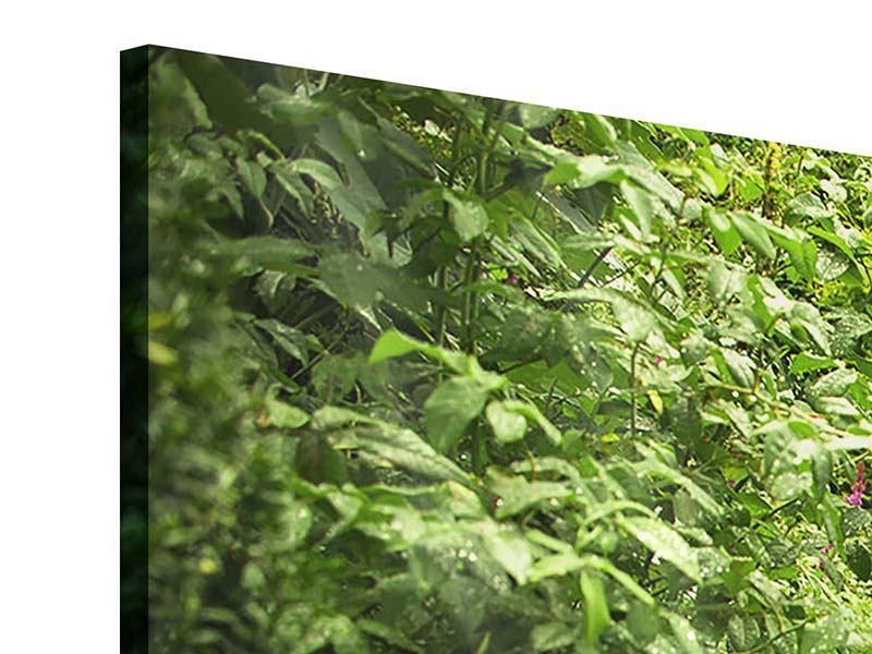 Acrylglasbild Panorama Gartenweg