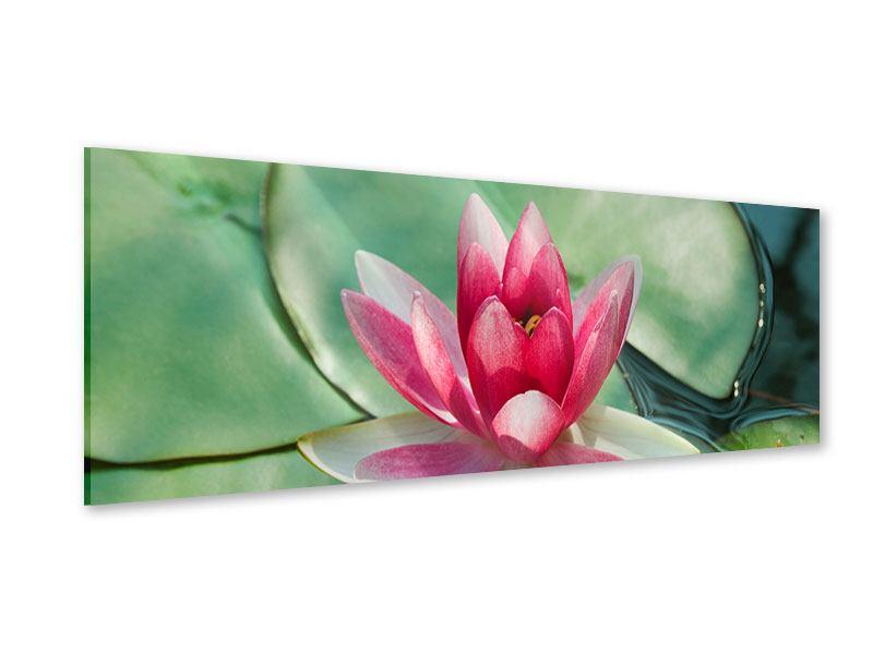 Acrylglasbild Panorama Der Frosch und das Lotusblatt