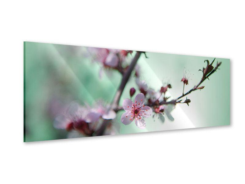 Acrylglasbild Panorama Die japanische Kirschblüte