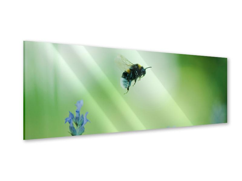 Acrylglasbild Panorama Die Biene