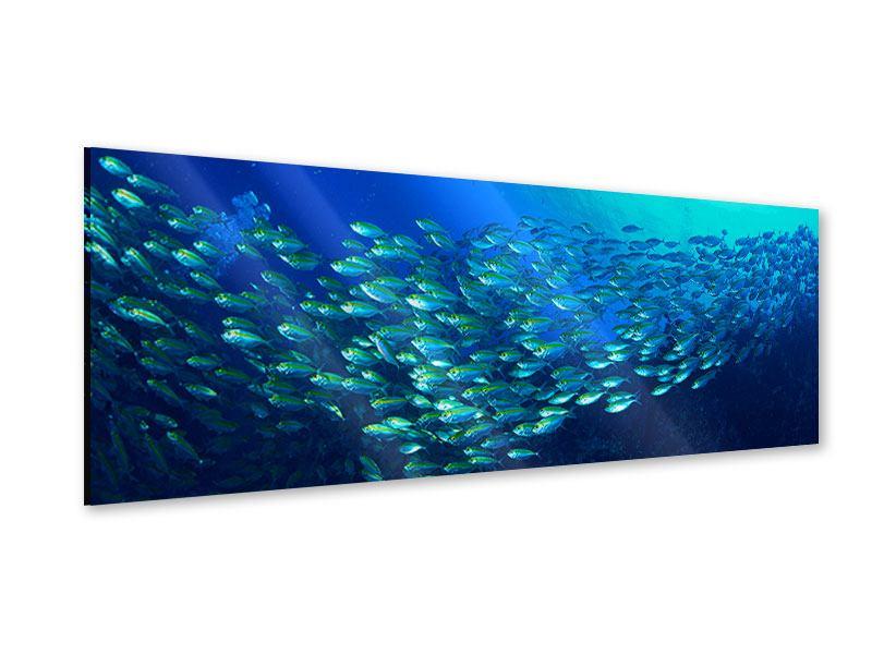 Acrylglasbild Panorama Fischschwarm