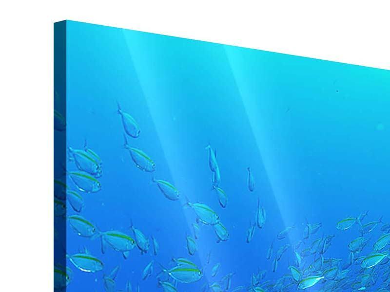 Acrylglasbild Panorama Fischschwärme