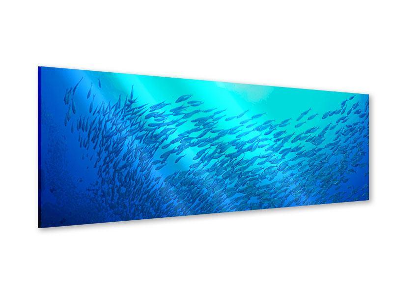 Acrylglasbild Panorama Fischwelt
