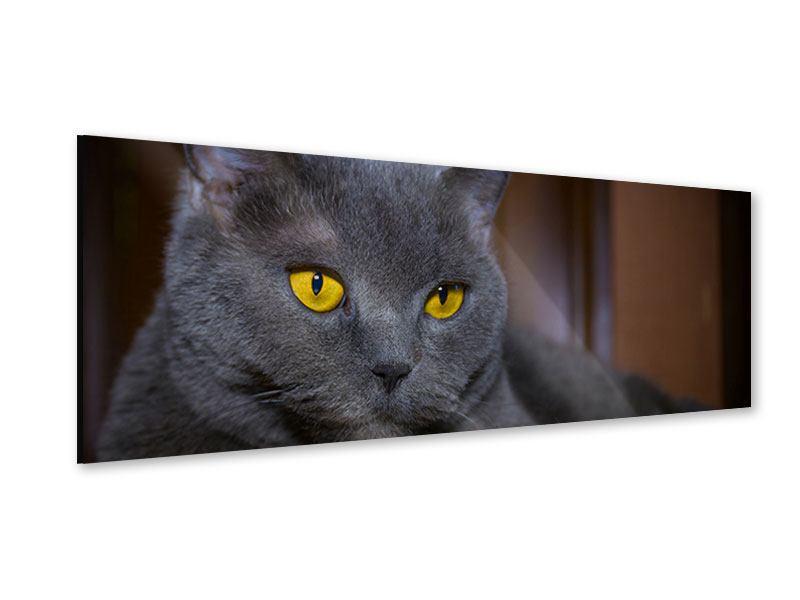 Acrylglasbild Panorama Katzengöttin