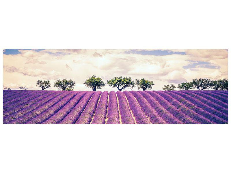 Acrylglasbild Panorama Das Lavendelfeld