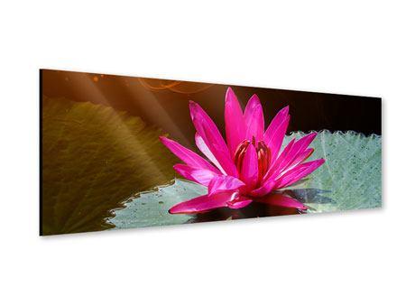 Acrylglasbild Panorama Der Frosch und das Seerosenblatt