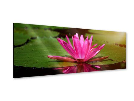 Acrylglasbild Panorama Lotus im Wasser