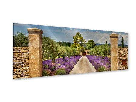 Acrylglasbild Panorama Lavendel-Garten