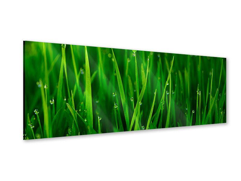 Acrylglasbild Panorama Gras mit Morgentau