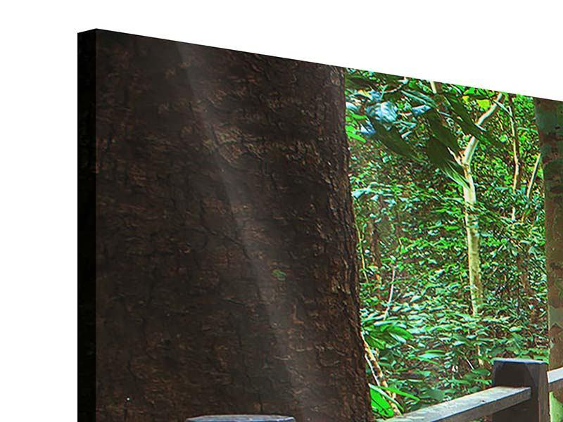 Acrylglasbild Panorama Die Brücke im Wald