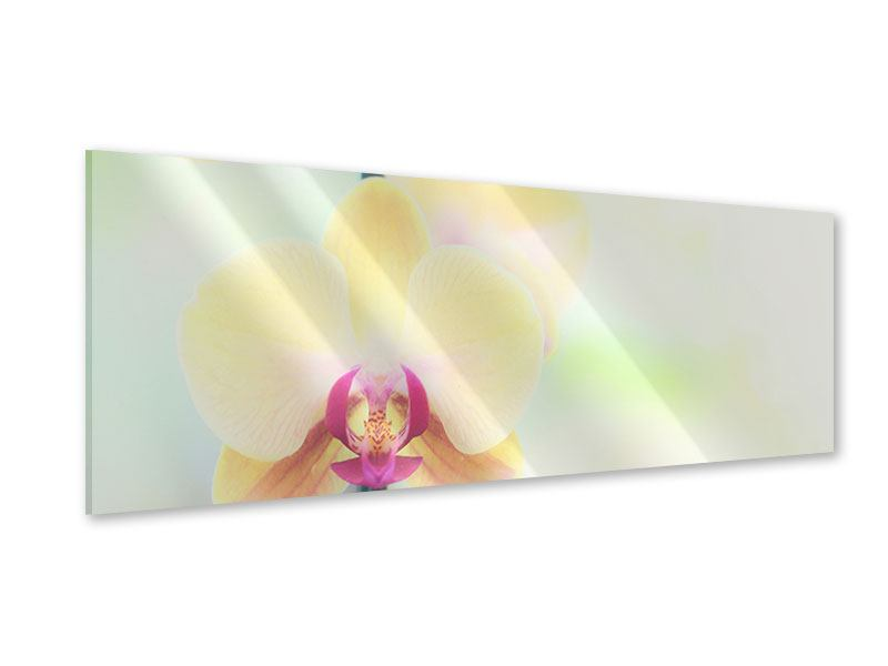 Acrylglasbild Panorama Lovely Orchidee