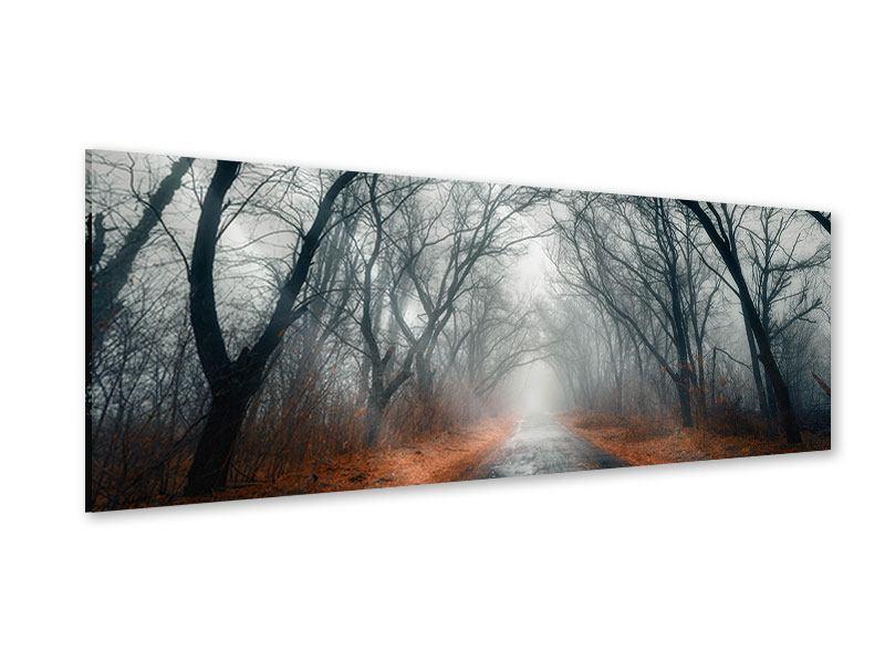 Acrylglasbild Panorama Mysteriöse Stimmung im Wald