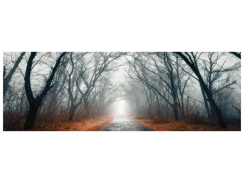 Panoramic Acrylic Print Mysterious Mood In The Forest