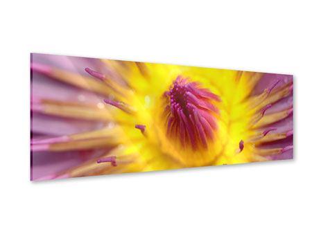 Acrylglasbild Panorama XXL-Lotus