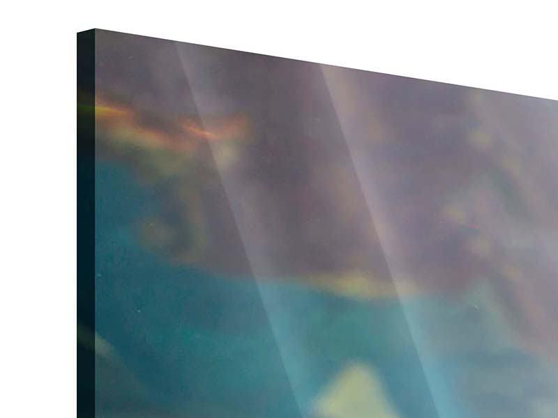 Acrylglasbild Panorama Hai