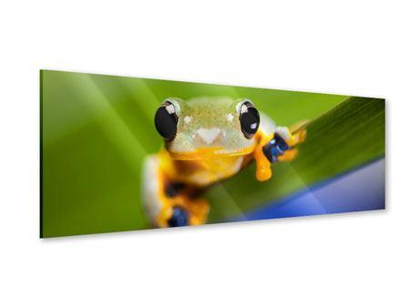 Acrylglasbild Panorama Frosch XXL