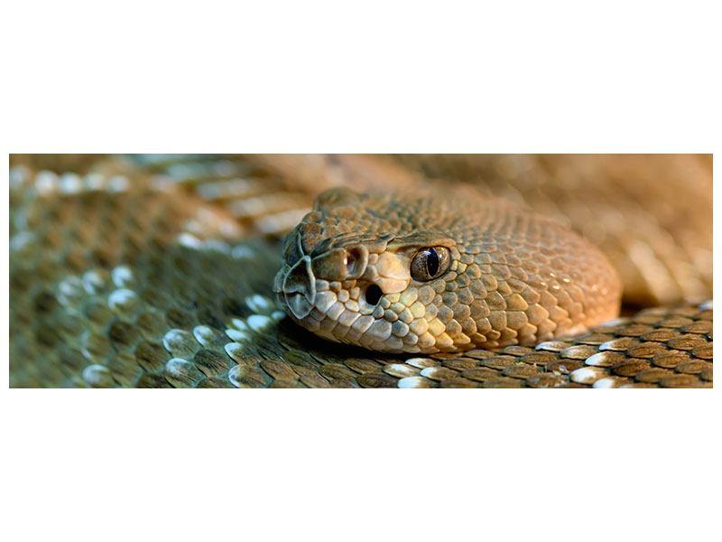 Acrylglasbild Panorama Viper