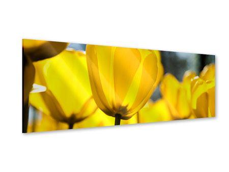 Acrylglasbild Panorama Gelbe Tulpen in XXL