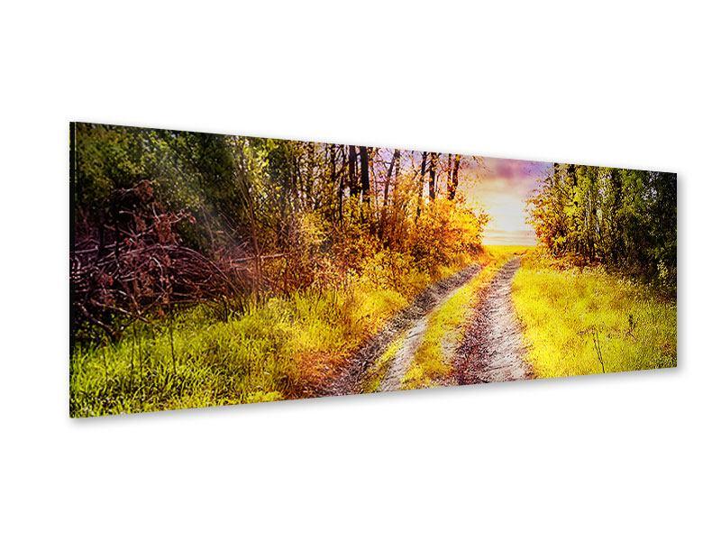 Acrylglasbild Panorama Der Waldpfad