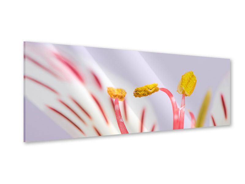 Acrylglasbild Panorama Close Up Die exotische Schönheit