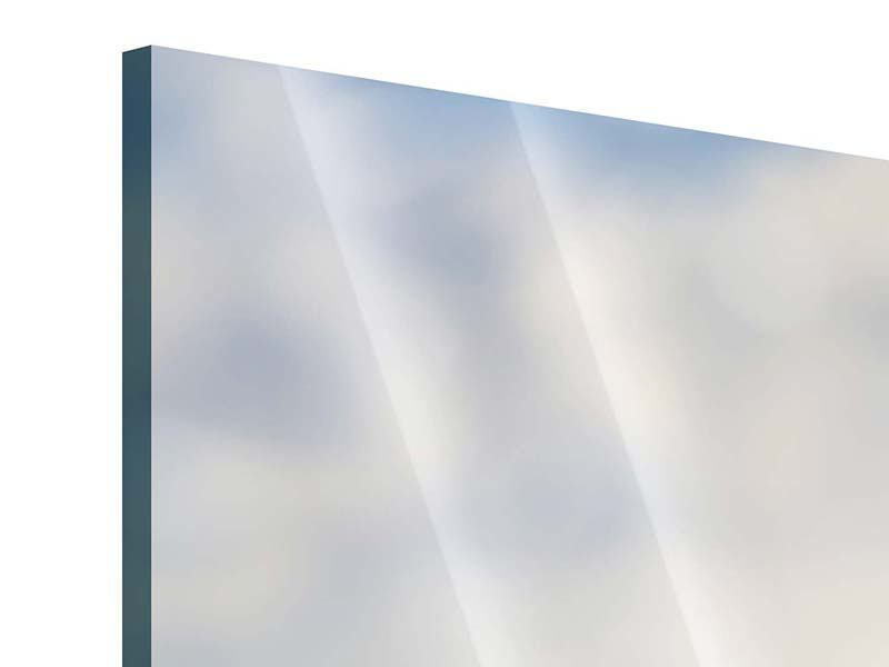 Acrylglasbild Panorama Zwei Geparden