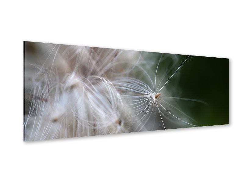 Acrylglasbild Panorama Close up Blütenfasern