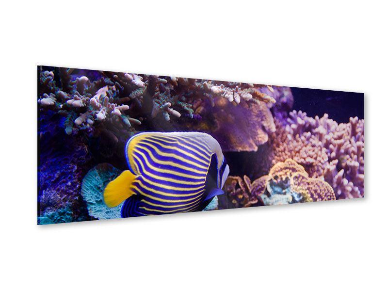 Acrylglasbild Panorama Faszination Unterwasser