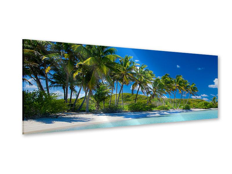 Acrylglasbild Panorama Standpalmen