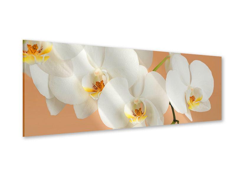 Acrylglasbild Panorama Weisse Orchideenblüten