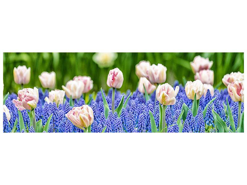 Acrylglasbild Panorama Ein Garten mit Tulpen