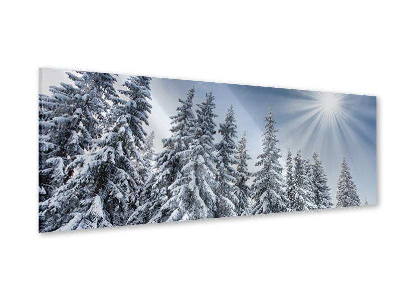 Acrylglasbild Panorama Wintertannen