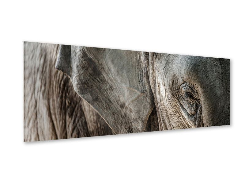 Acrylglasbild Panorama Close Up Elefant