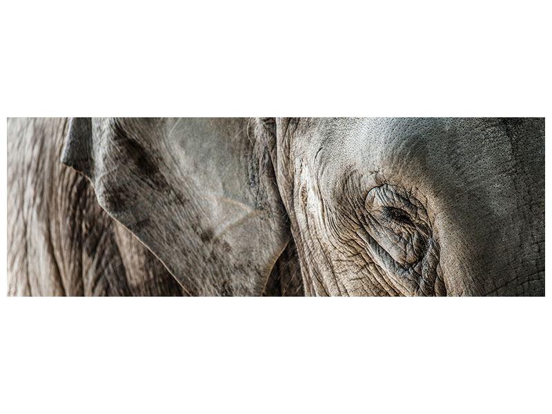 Acrylglasbild Panorama Close Up Elefant