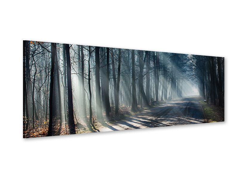 Acrylglasbild Panorama Wald im Lichtstrahl