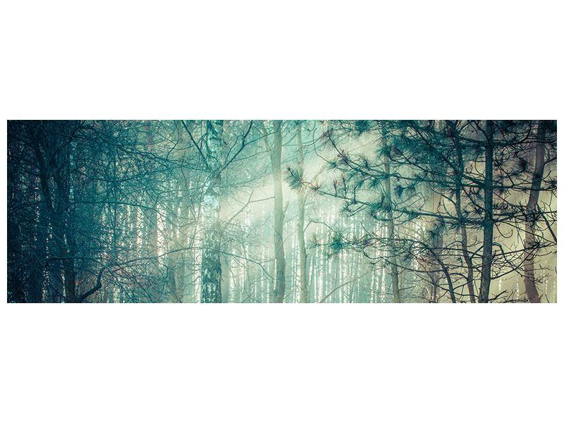 Acrylglasbild Panorama Pinienwald