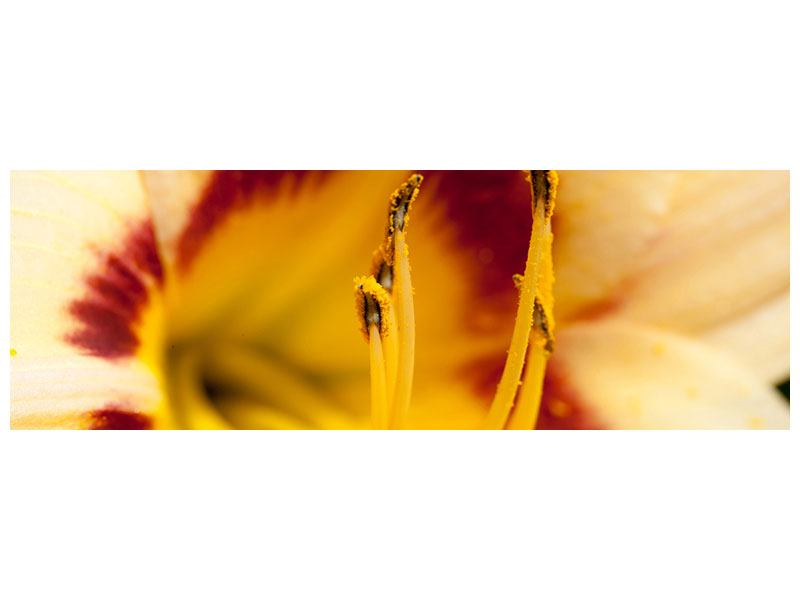 Acrylglasbild Panorama Riesenlilie