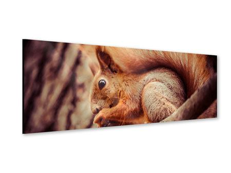 Acrylglasbild Panorama Eichhörnchen