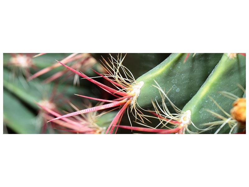 Acrylglasbild Panorama Die Kaktusblüte