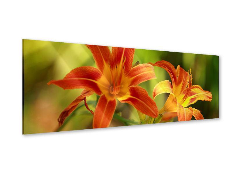 Acrylglasbild Panorama Natural Lilien