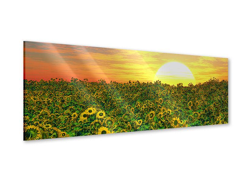 Acrylglasbild Panorama Blumenpanorama bei Sonnenuntergang