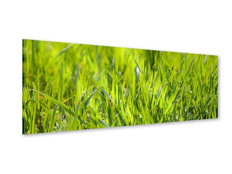 Acrylglasbild Panorama Gras im Morgentau